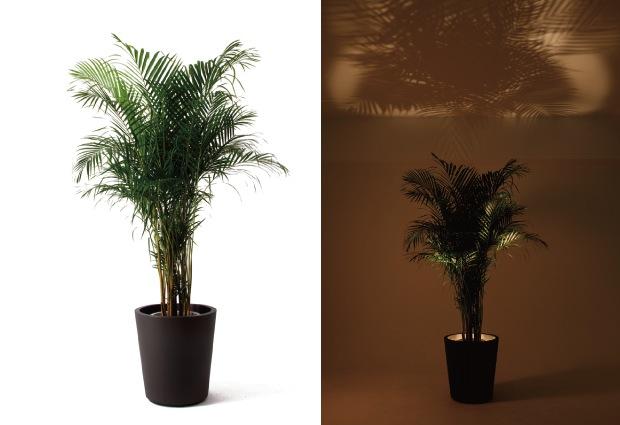 forestarium lamp light plant pot