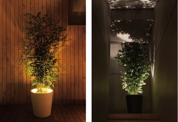 forestarium lamp light plant pot