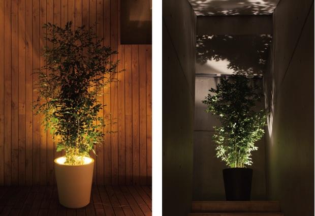 Outdoor Plant Pot Ideas