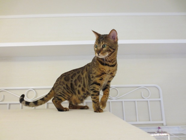 tokyo share houses share la cat