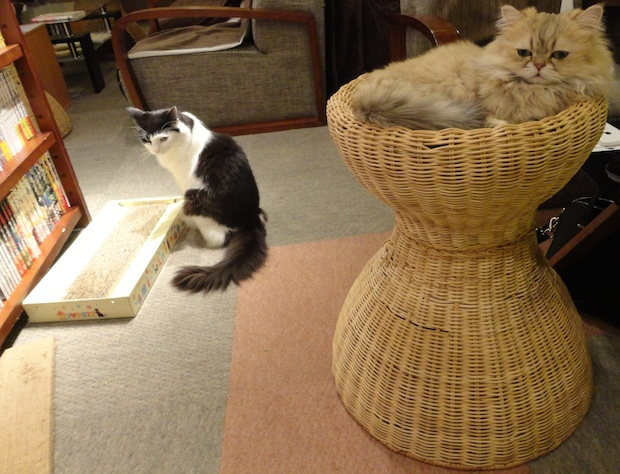 tokyo-cat-cafe