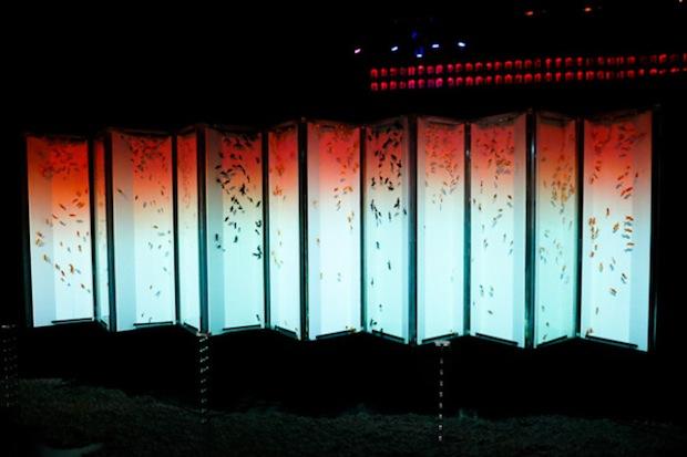eco edo nihonbashi art aquarium tokyo goldfish event summer