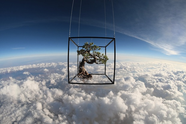 makoto azuma exbiotanica bonsai flower botanical art space launch flight
