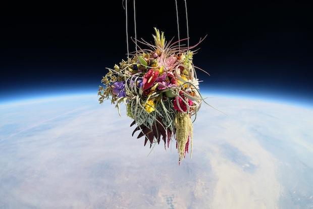 makoto azuma exbiotanica bonsai flower botanical art space launch flight