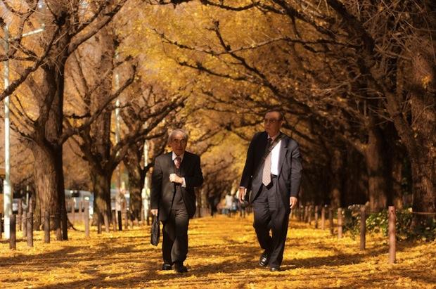 golden ginkgo trees tokyo autumn leaves