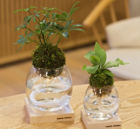 pianta stanza botanical candle torch