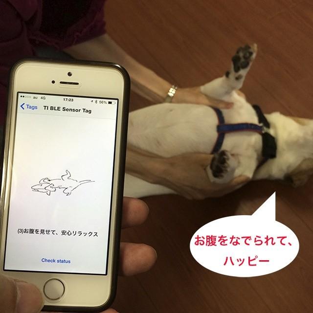 shiraseru am pet wearable monitoring health tracking device app smartphone japan