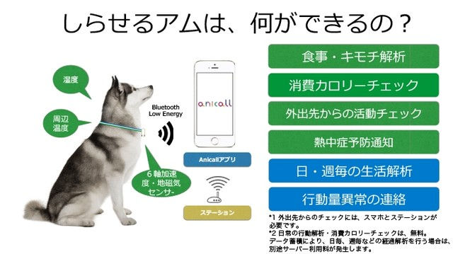 shiraseru am pet wearable monitoring health tracking device app smartphone japan