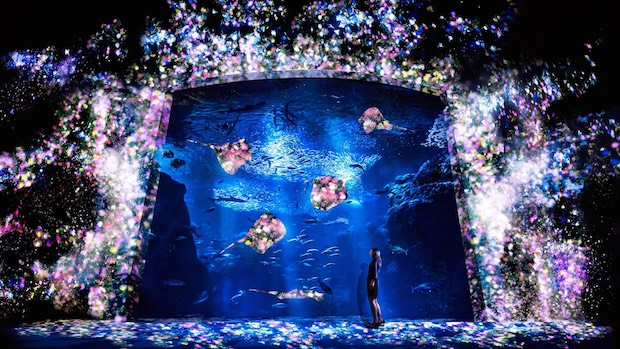 team lab enoshima aquarium fujisawa interactive night wonder event