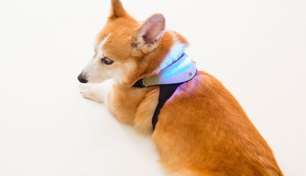 inupathy japanese dog emotional feeling visualizer harness device pet