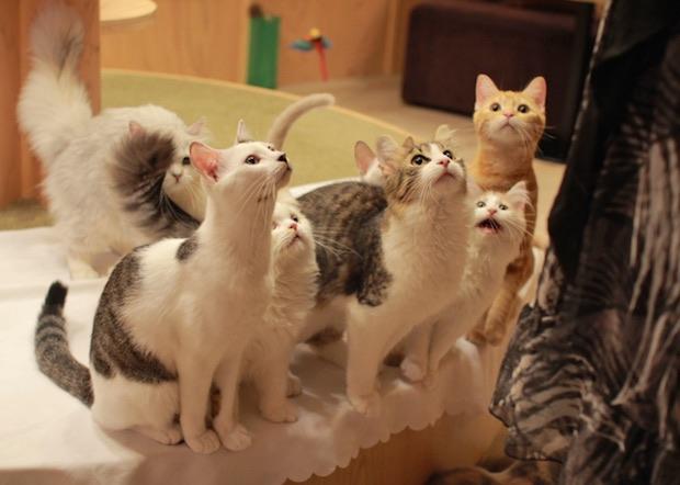 cats dandruff cure