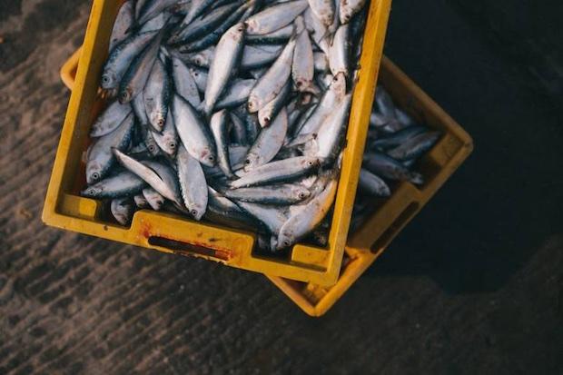 toyosu fish market tsukiji tokyo move