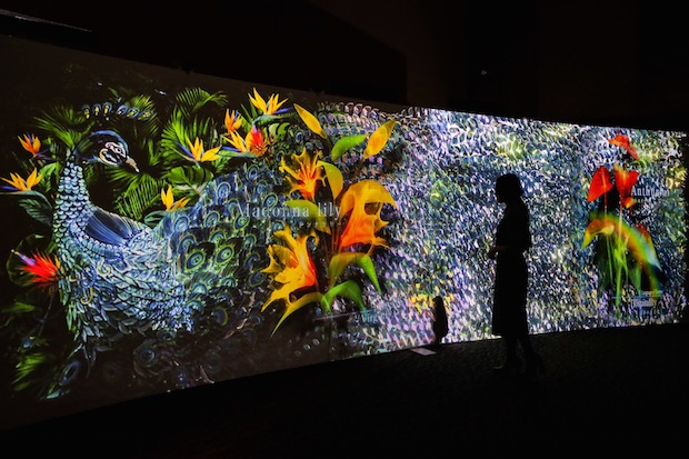 flowers naked paradiso midtown tokyo roppongi event installation