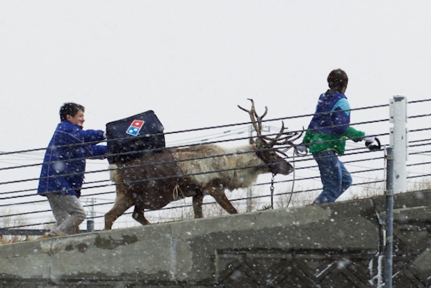 dominos pizza japan delivery hokkaido reindeer snow christmas