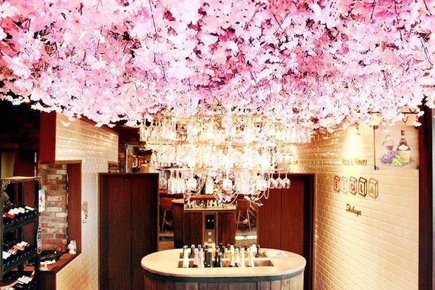 air hanami cherry blossom party indoor