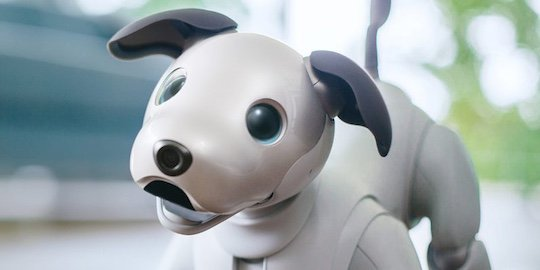 aibo sony robotic dog new reboot