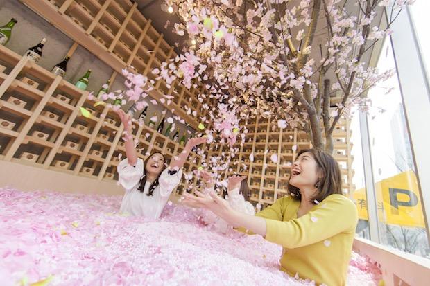 sakura chill bar tokyo hanami cherry blossom